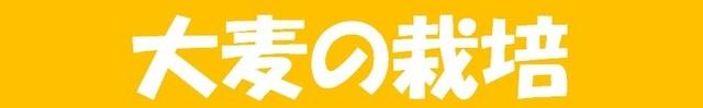 つくり方_大麦の栽培.jpg